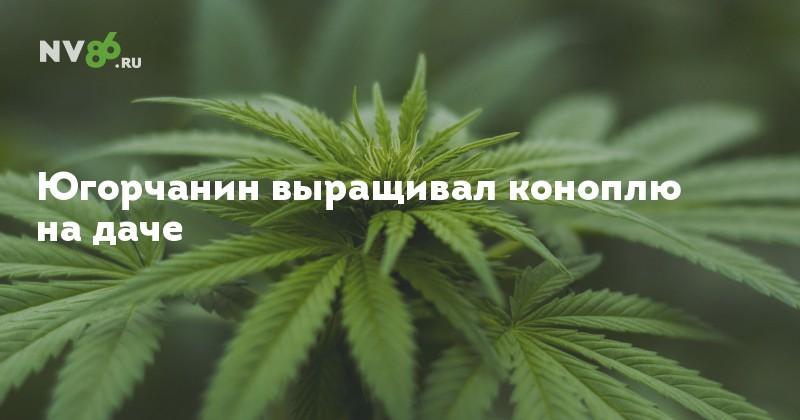 масоны марихуана