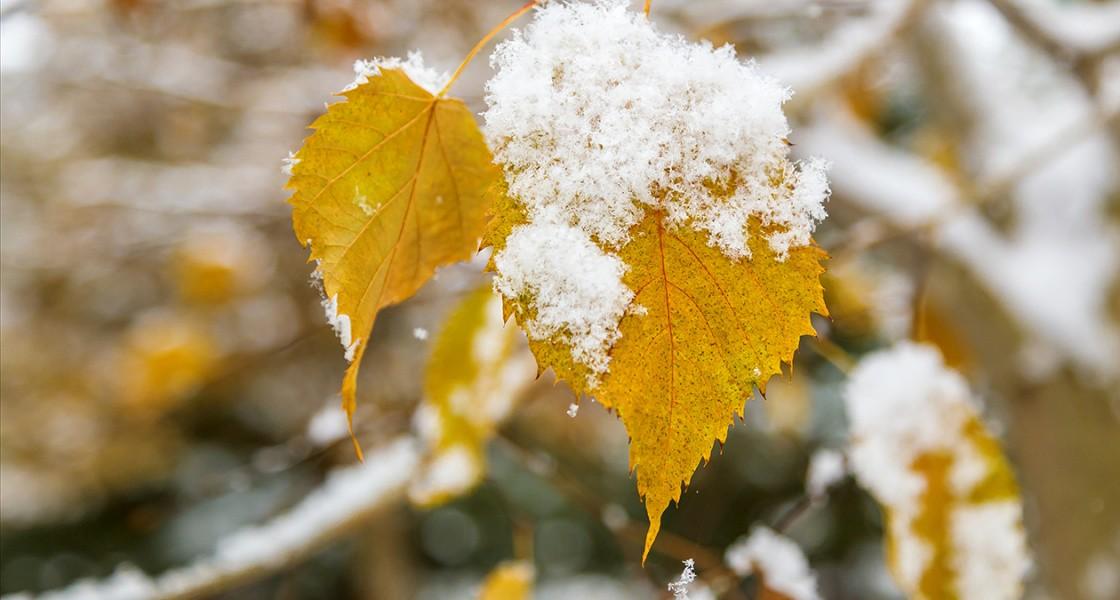 новгородской области картинка первого снега приглашать помощь